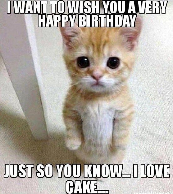 Happy Birthday Cat Wishes: Image Result For Cat Birthday Meme