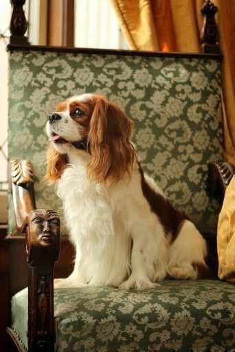 The Top 5 Ecommerce Trends You Ought To Look Out For Cavalier King Charles King Charles Spaniel King Charles
