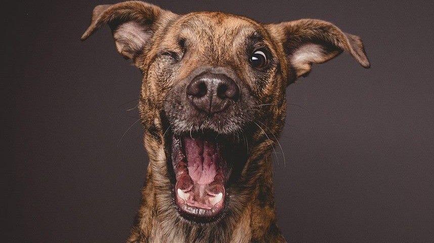 Las encantadoras sesiones fotográficas de perros que estaban en plena distracción