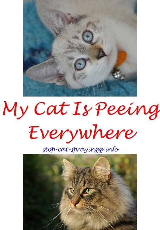 Neutered cat urinating everywhere