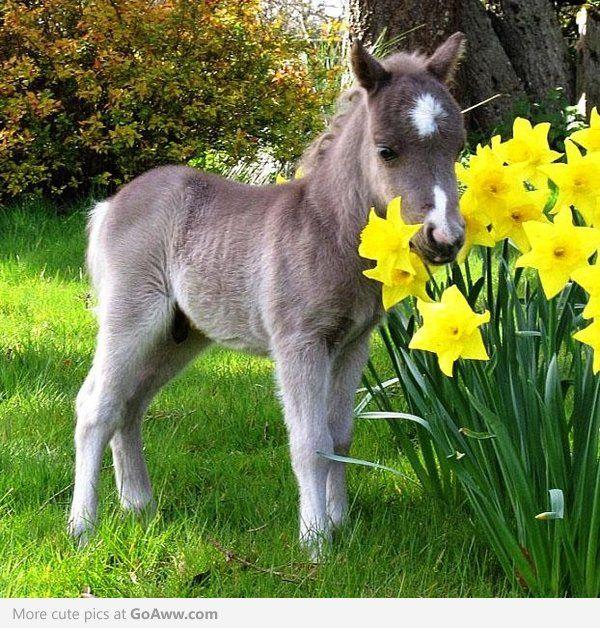 all the pretty horses pdf download