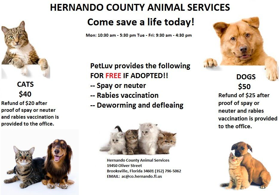 Petfinder Link To All Adoptables Listed At Hernando County Animal Services In Brooksville Fl 3 Come Find Your Best Friend Here Animals Pet Search Baby Animals