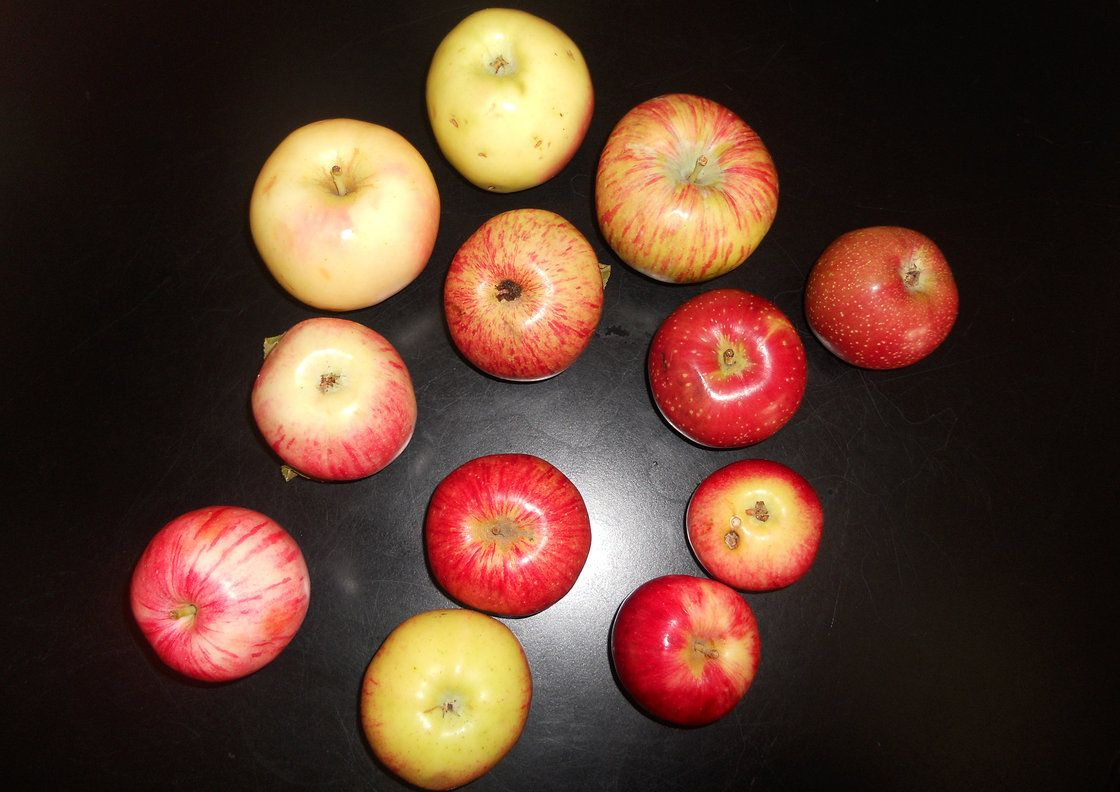 The Comeback Of The Endangered Colorado Orange An Apple New Fruit Fruit Edible Landscaping