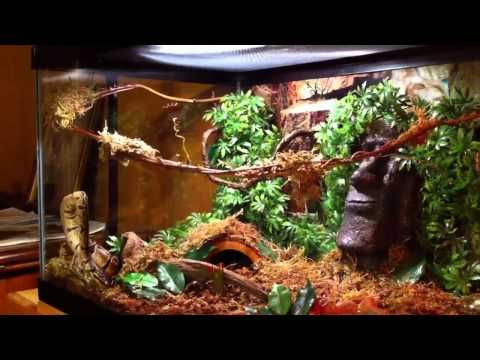 Ball Python Cool Terrarium Set Up Youtube Reptiles