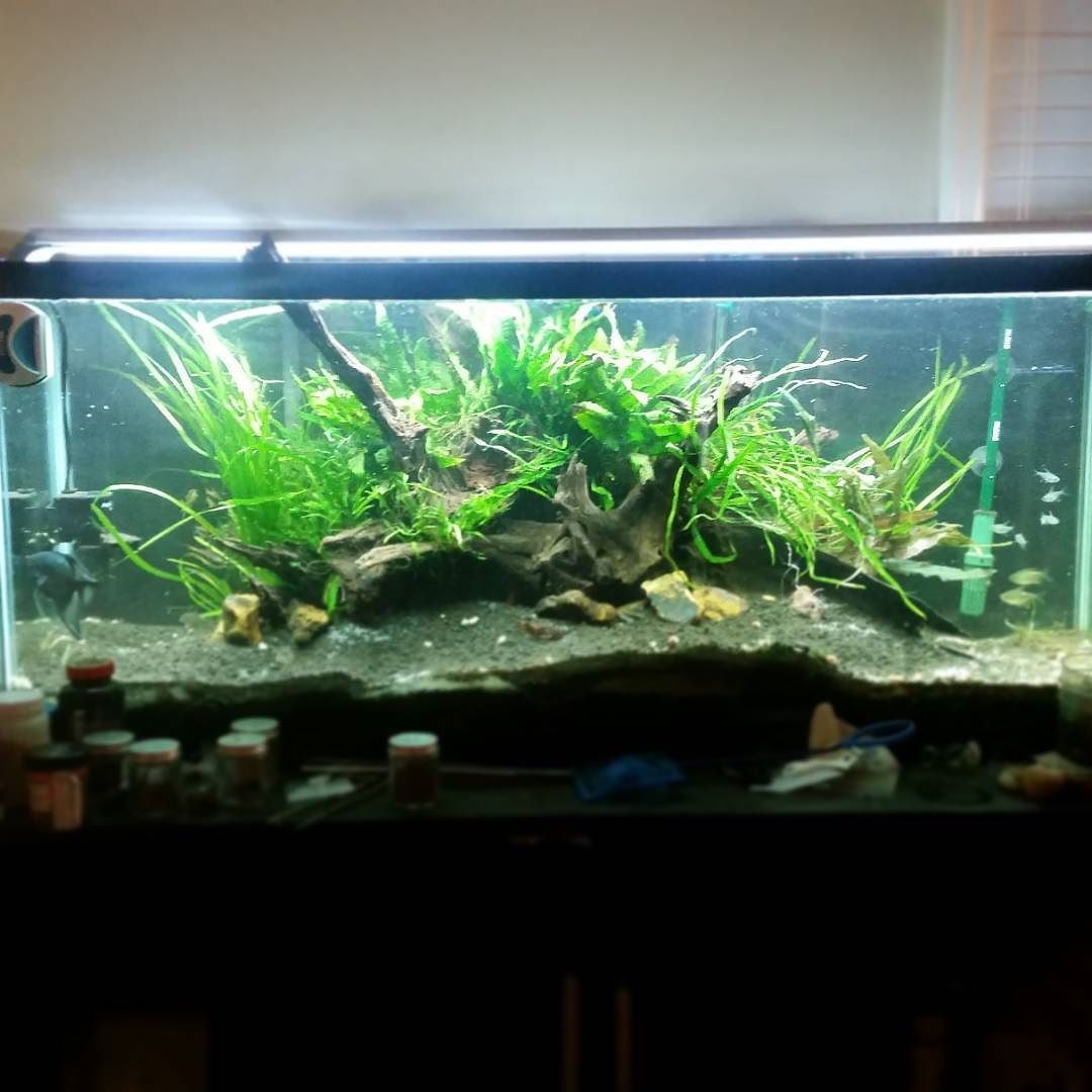Just rescaped my 55 gallon aquarium to be a little less for Fish tank driftwood