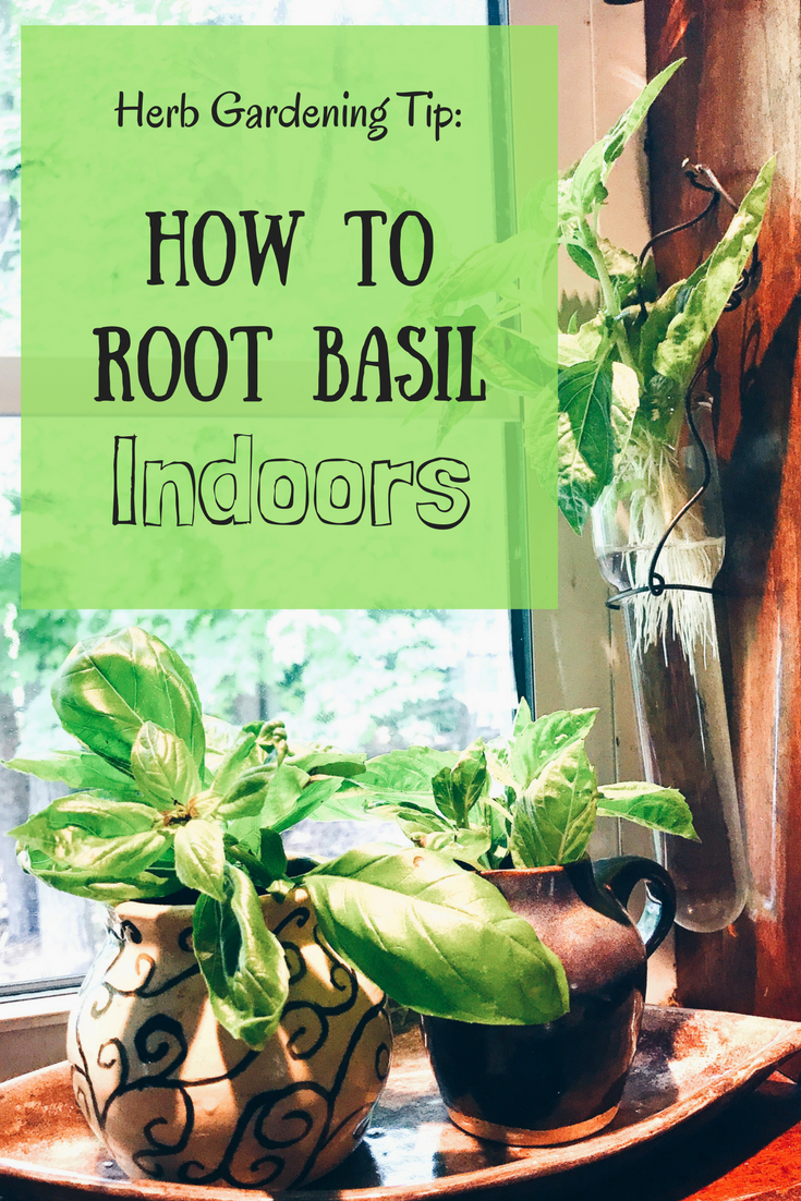 Herb Gardening Tip: How To Root Basil Indoors | Gardening For Beginners |  Gardening Ideas