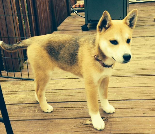 Adopt ShirleyADOPTED on | Loving home for them? | Dogs, Dog breeds, Pets