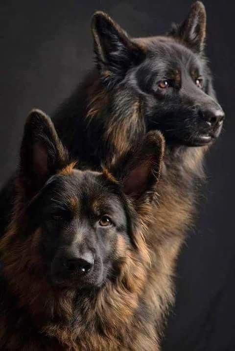 Pin von Dani Philibotte auf Dog & Cat Hodgepodge Hunde
