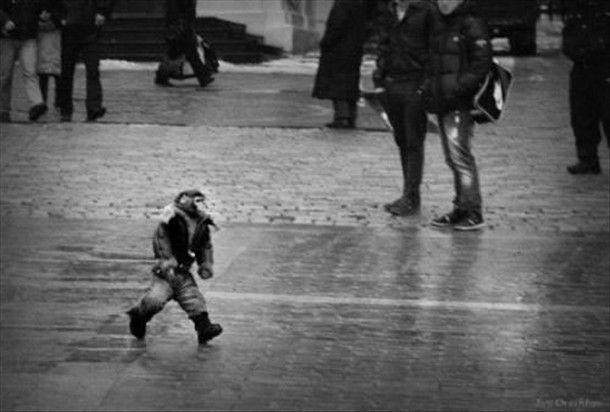 monkey in a coat