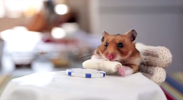 Yes, You Want to Watch This Tiny Hamster Eat Tiny Burritos | Serious Eats