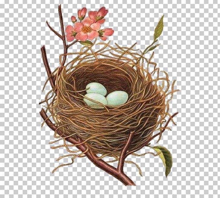 Edible Bird S Nest Bird Nest Png Clipart Animals Art Bird Edible Bird S Nest Clip Art Bird