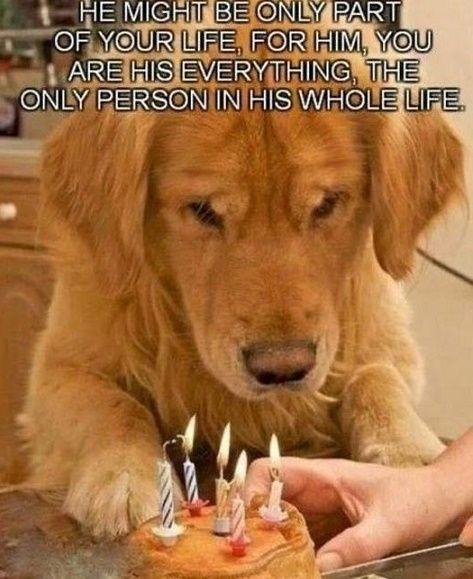 Quien Ama A Su Perro Sabe Que La Palabra Mascota No Es