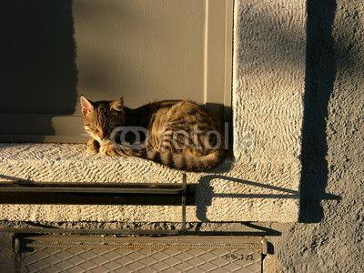 Katze auf einer Fensterbank in der Abendsonne in Alacati bei Izmir in der Türkei