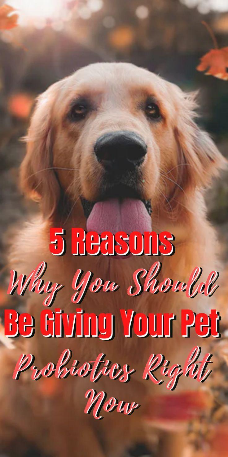 DOCTORZ veterinar si Service dogs