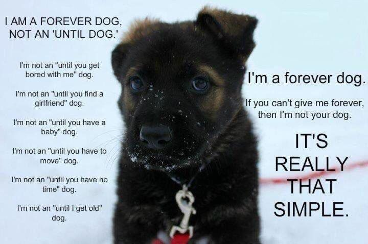 Adopt Don T Shop Drop Furever Dogs Animals Dog Quotes