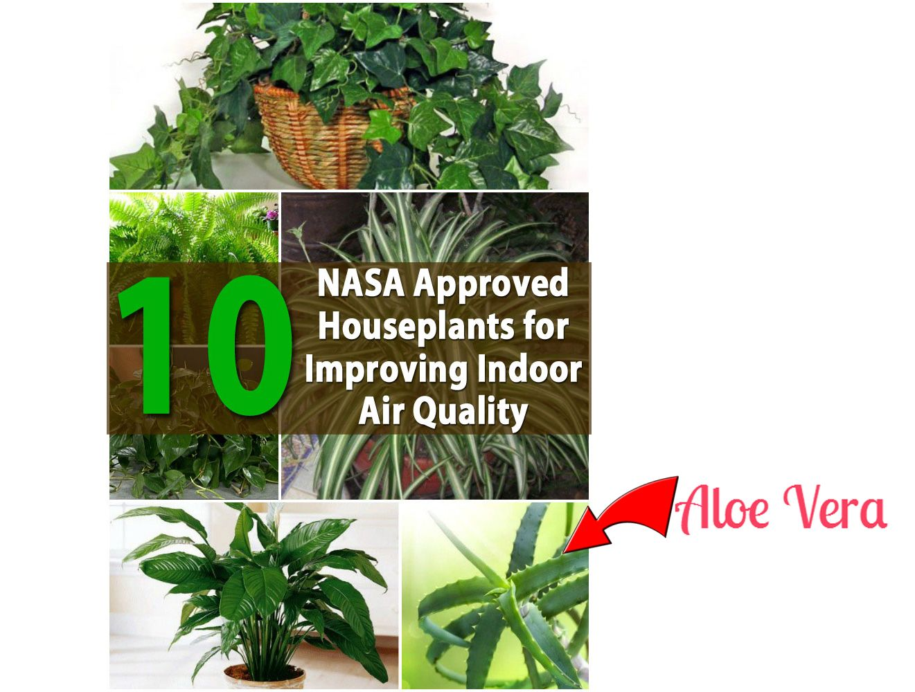 Aloe is NASA approved indoor plant for improving indoor