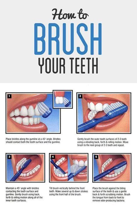 Der richtige Weg, um sich die Zähne zu putzen, einschließlich einer Infografik!   – From Our Blog