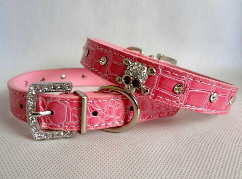 Rhinestone Skull Collar For Cats & Dogs PayPal