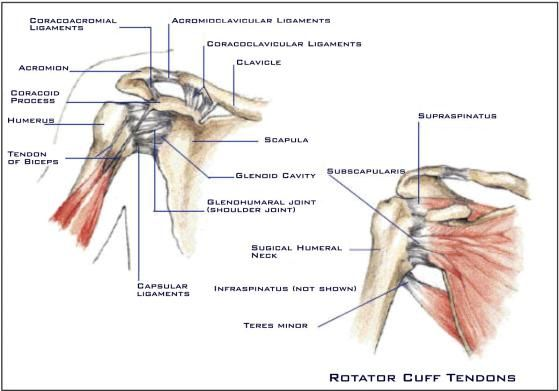Numbness in thumb after rotator cuff surgery