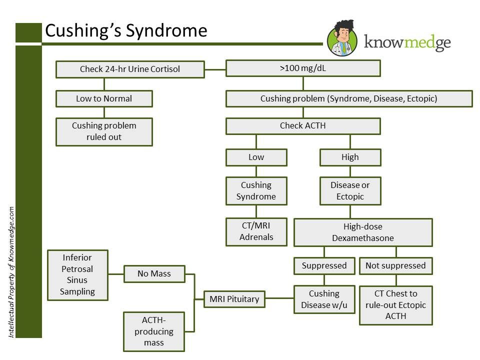 ABIM Internal Medicine Exam Review: How to work up Cushing's Syndrome (http://www.knowmedge.com)