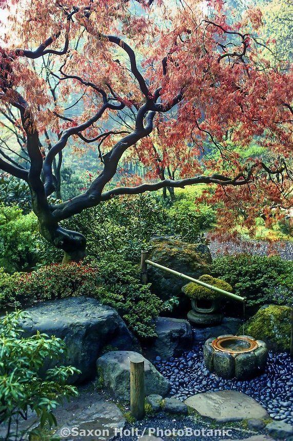 garden Japanese garden Deer Scare under Japanese Maple tree with emerging sp Japanese garden Deer Scare under Japanese Maple tree with emerging spjapanese garden Japanese...