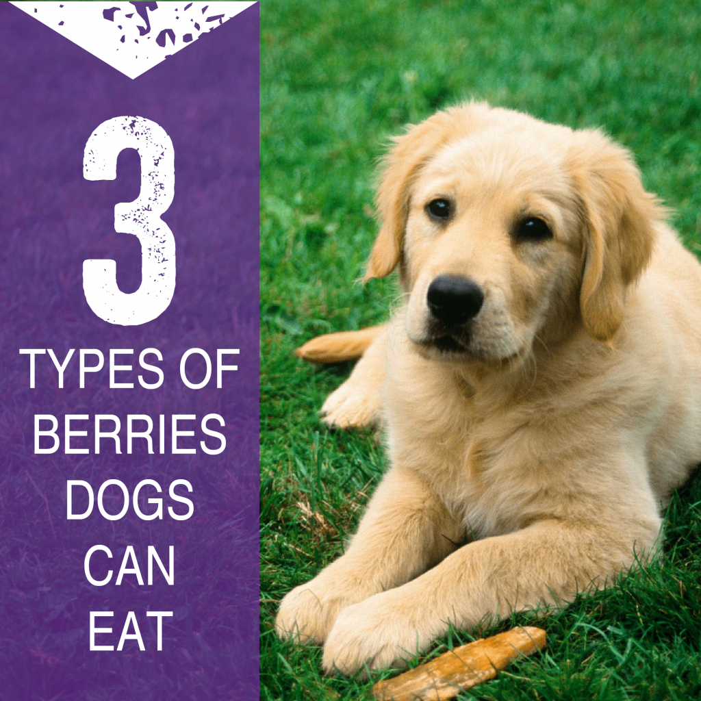 Learn What 4 Berries Can Do For Your Health And Wellness