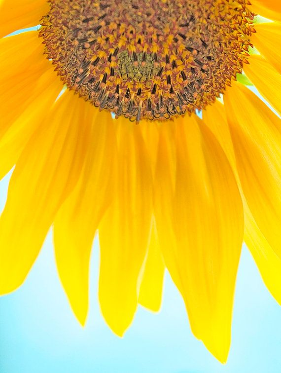 Sunflower 2 with blue and yellow wall art by FloatingLeafArts
