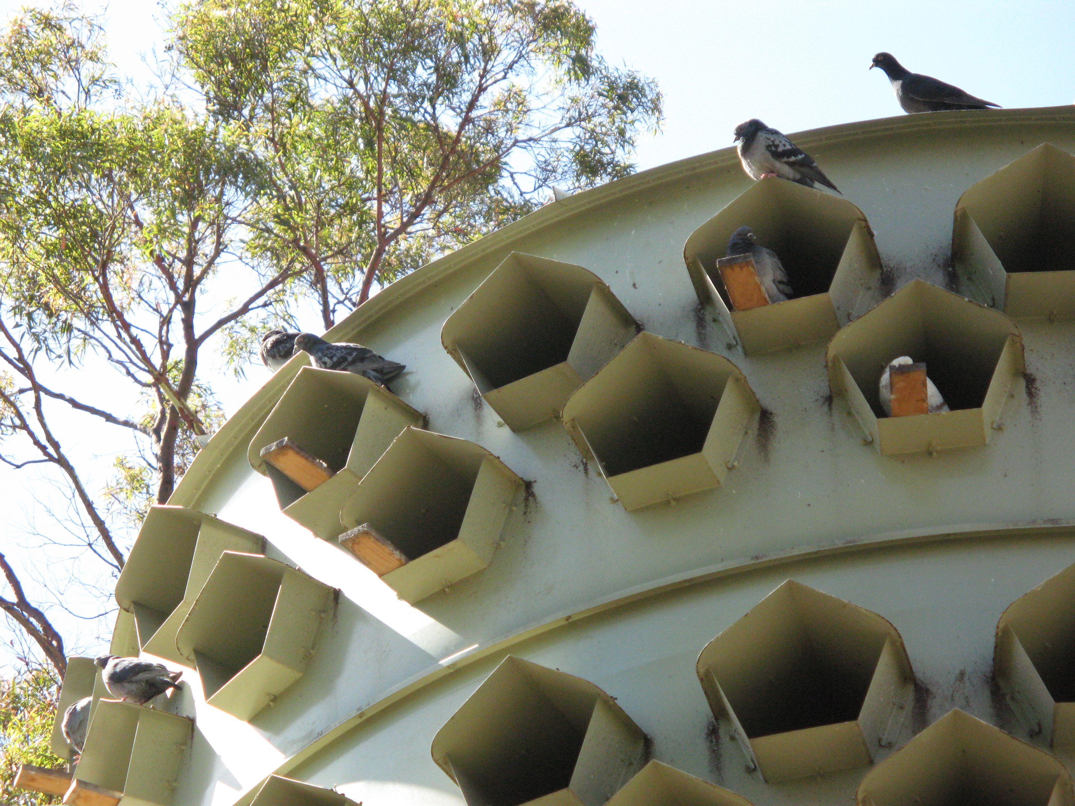 37 best a pigeon place images on pinterest pigeon loft coops