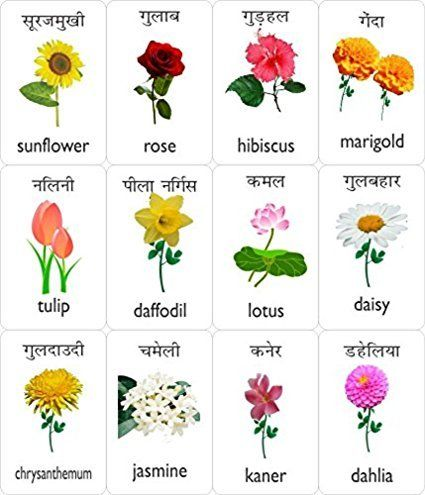 Flower Name Yahoo Search Results Yahoo Image Search Results Flower Names Daisy Flower Types Flower Chart