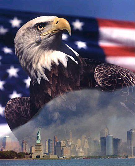 9 11 Eagle Crying Patriotic Bald Eagle American Eagles