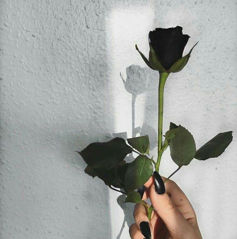 Black Rose Tumblr Siyah Gül Tumblr 2019 Rose Tumblr Rose