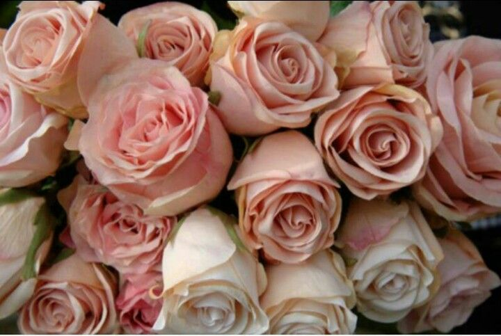 Ramo De Flores Tumblr Rosas Ver Ciudades Hermosas