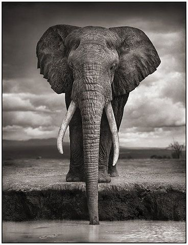 Nick brandt on this earth a shadow falls across the ravaged land photography fotografiska stockholm sweden