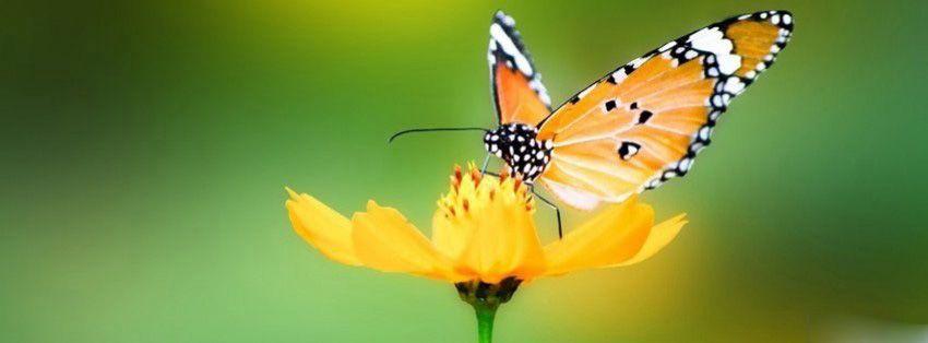 papillon sur fleur couverture facebook