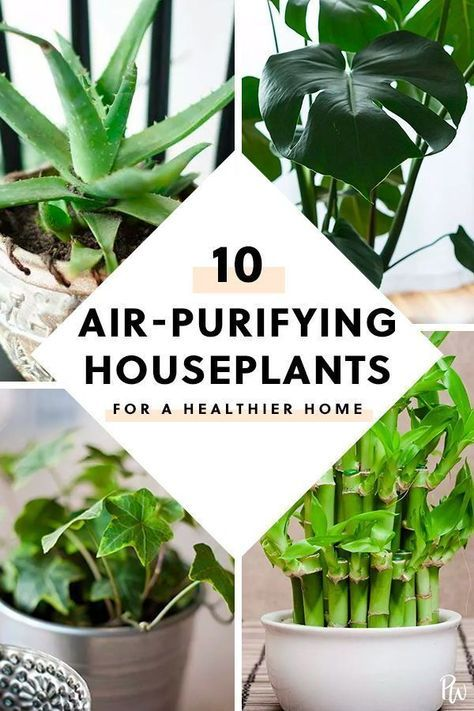 The 10 Best Air Purifying Plants for Your Home in 2020 ...