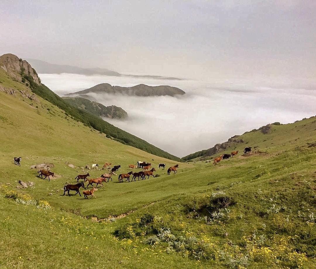 مسير جنگلي روستاي نيارق به آستارا #astara #azarbayjan #iran
