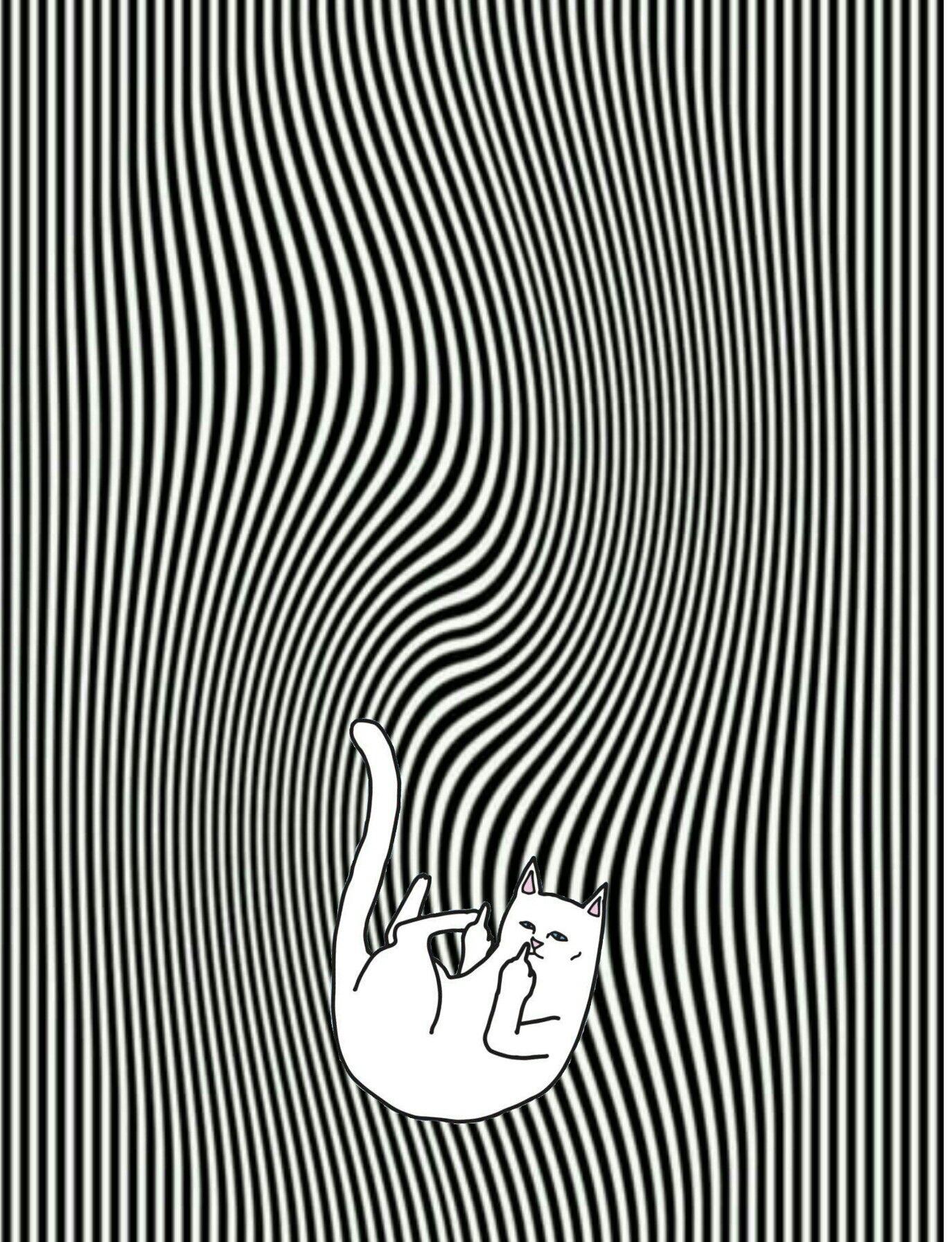 #ripndip #middle #finger #cat #wallpaper #iphone | Ripndip ...