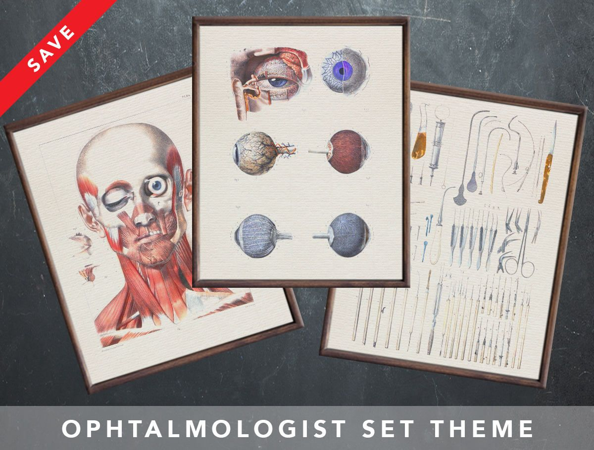 Anatomy Posters For Ophthalmologist Ophthalmology Optometry Medical