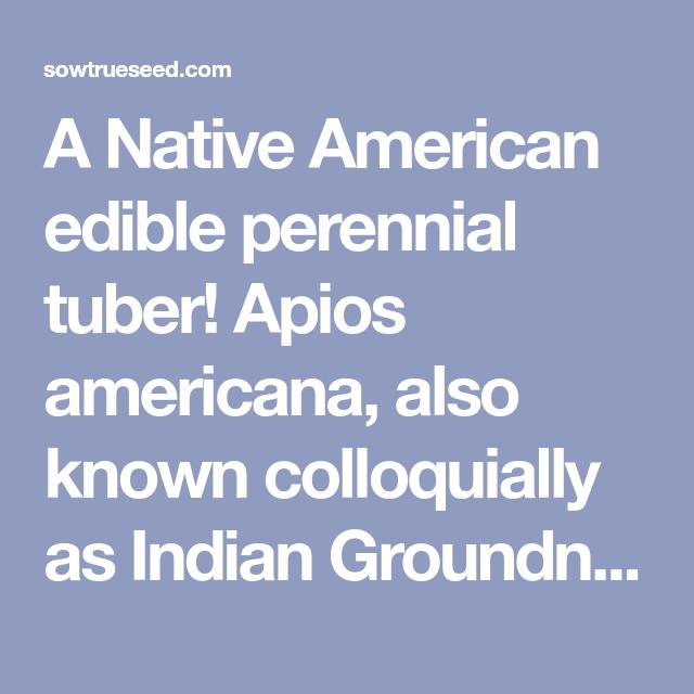 How to Grow Groundnuts (Apios americana) - an edible ...