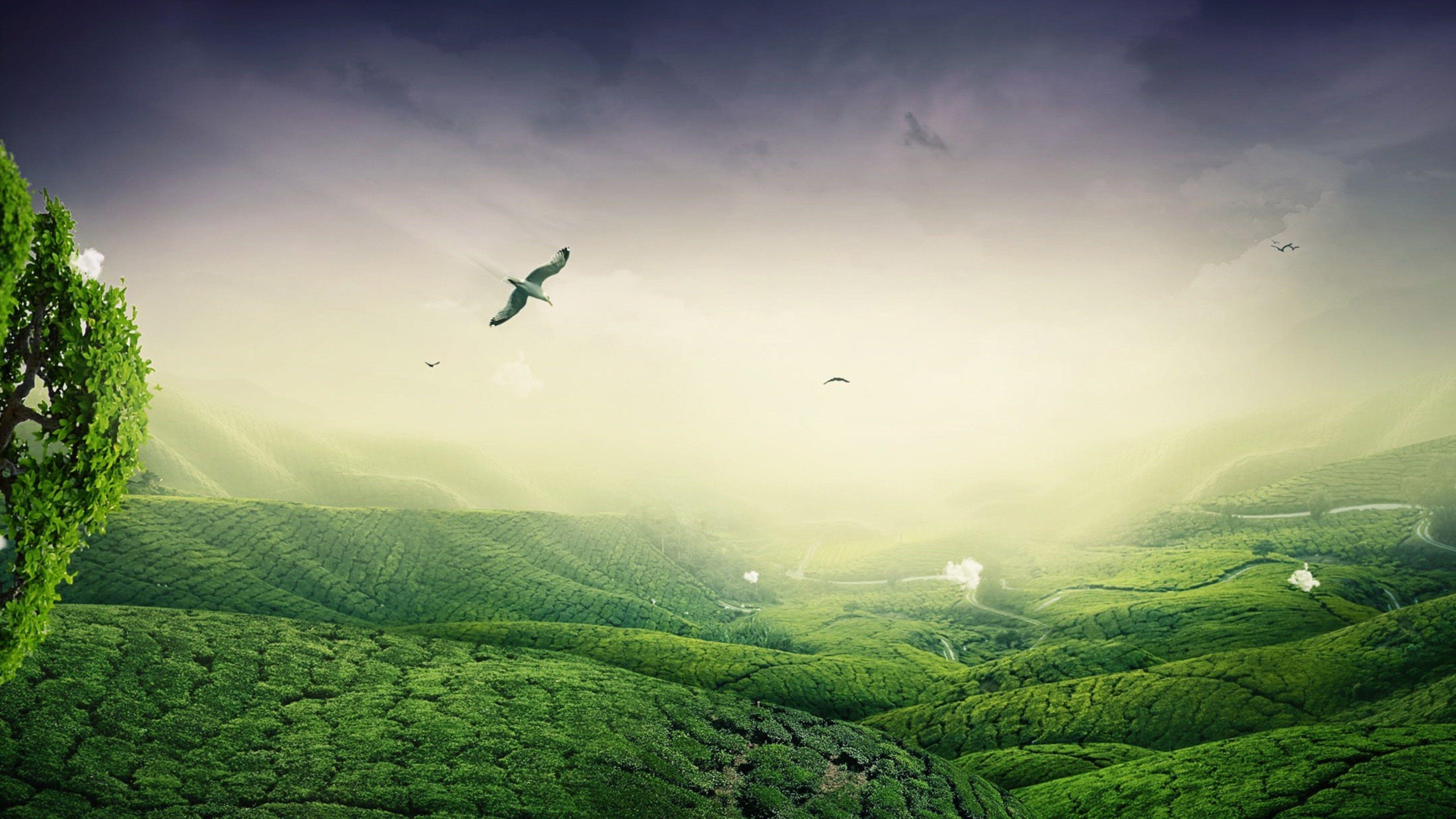 3840x2160 Green 4k Mac Background Wallpaper Beautiful Images Nature Landscape Wallpaper Landscape Background