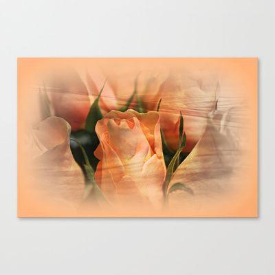Hazy Apricot Beauty Rose Abstract Canvas Prints by Judy Palkimas