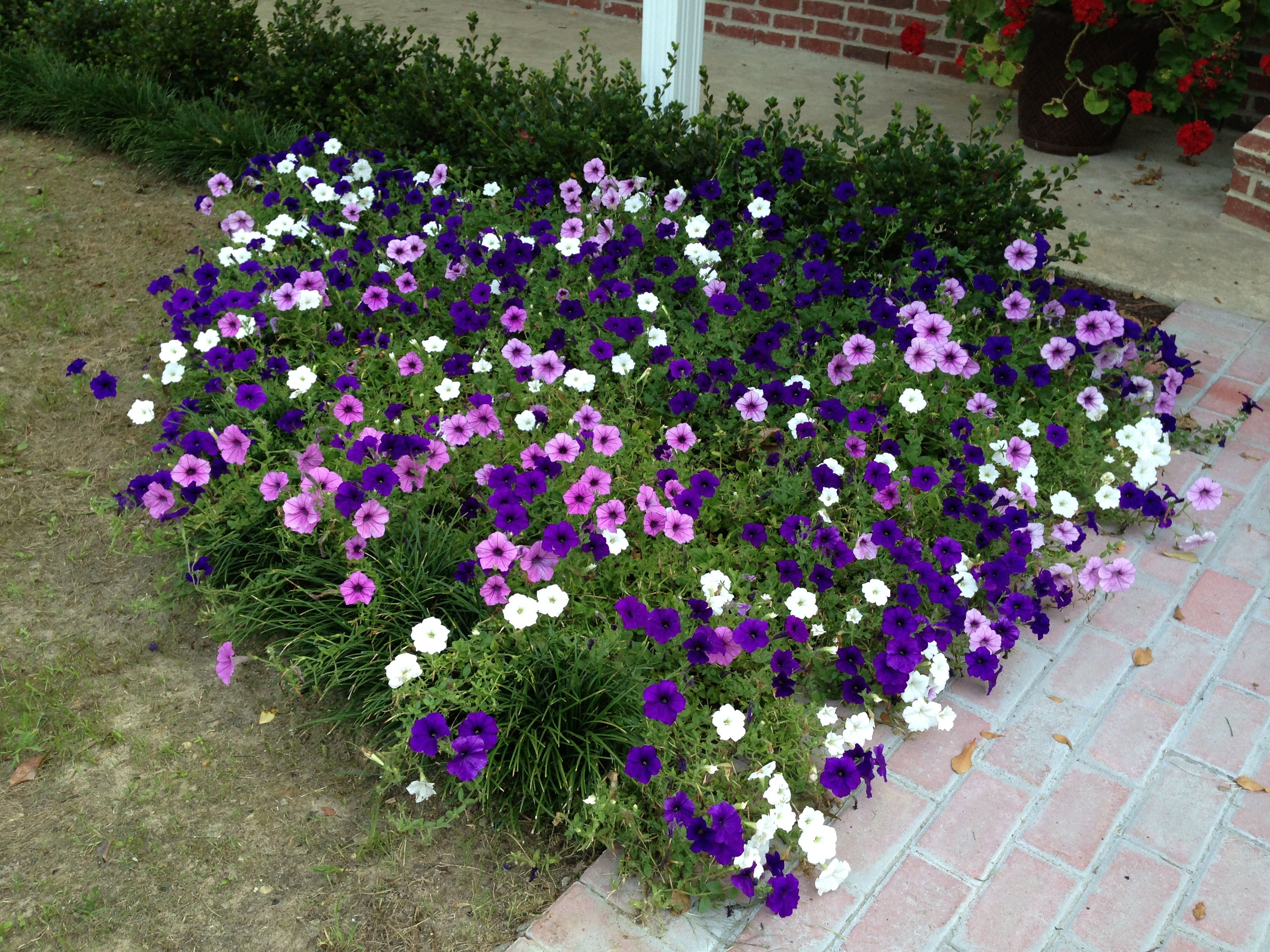 Pin By Rhonda Kirl On Our Happy Home Diy Landscaping Flower Beds Flowers