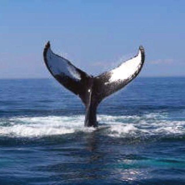 See a whale fluke