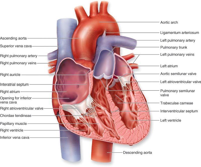 Donate Heart Disease The Divided Piggy Bank Pinterest Heart