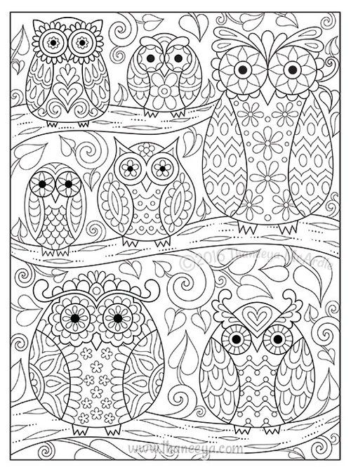 Owl Adult Coloring Page | Owl coloring pages, Bird coloring pages ... | 672x500