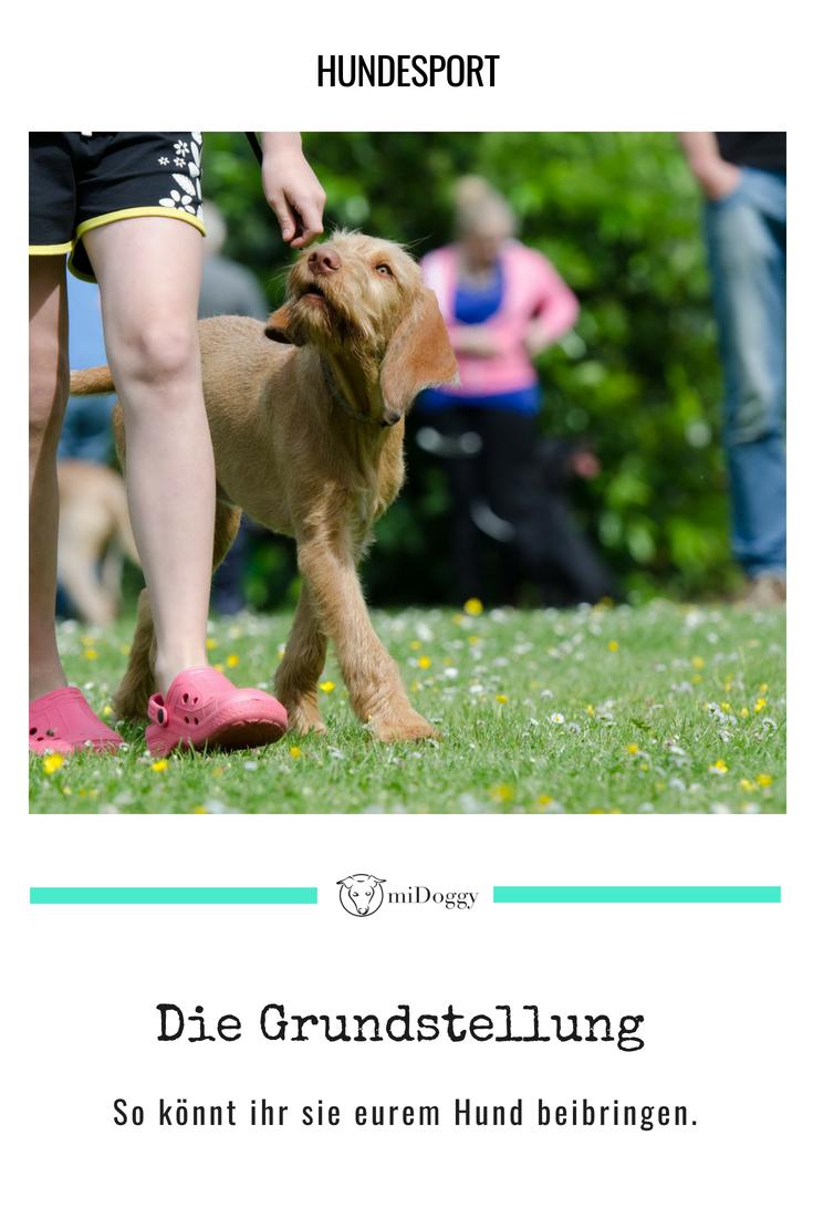 Viele Wege Fuhren Zur Grundstellung Hundesport Hundchen Training Und Hunde