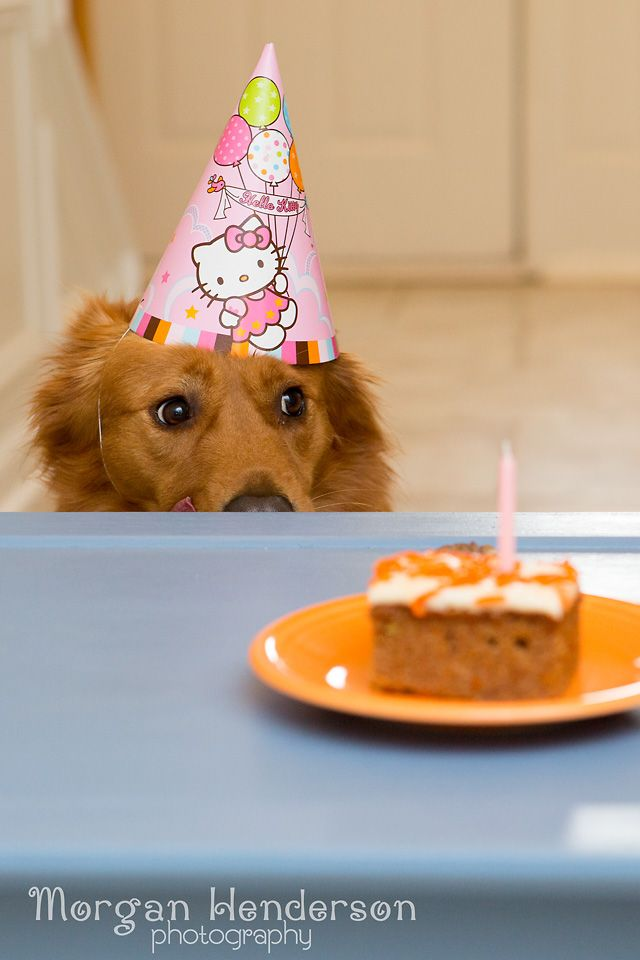 Happy Birthday Roxydog Morgan Henderson Raleigh Durham Dog Photography