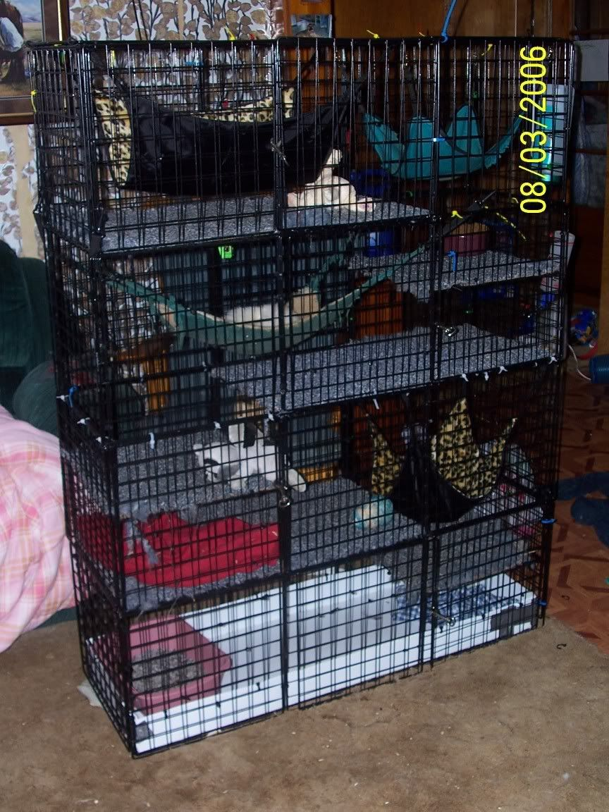 Would be cool to make a c cage for guinea pigs kinda like for Wire guinea pig cages