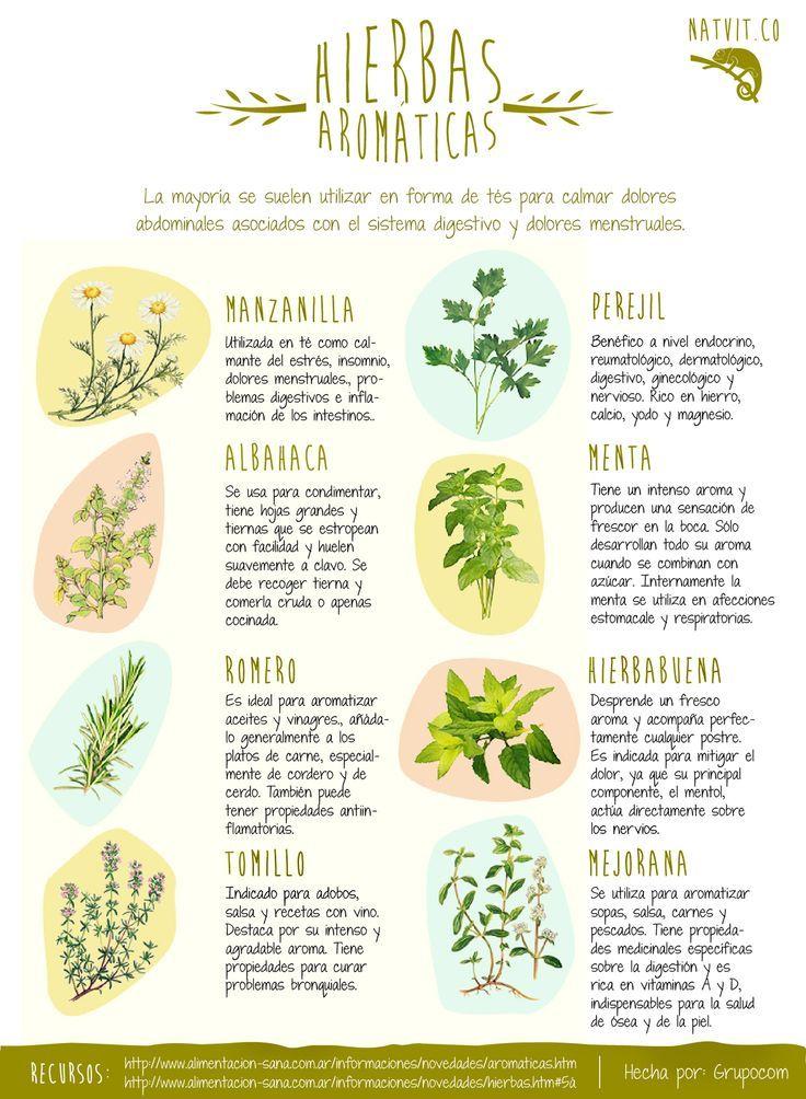 Plantas medicinales especias hierbas y otros condimentos for Tipos de hierbas medicinales