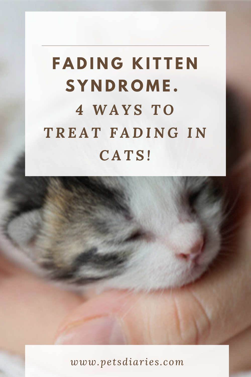 Fading Kitten Syndrome Cat Health Problems Issues And Signs Cat Health Care Tips Cat Issues In 2020 Cat Health Problems Cat Health Care Kitten